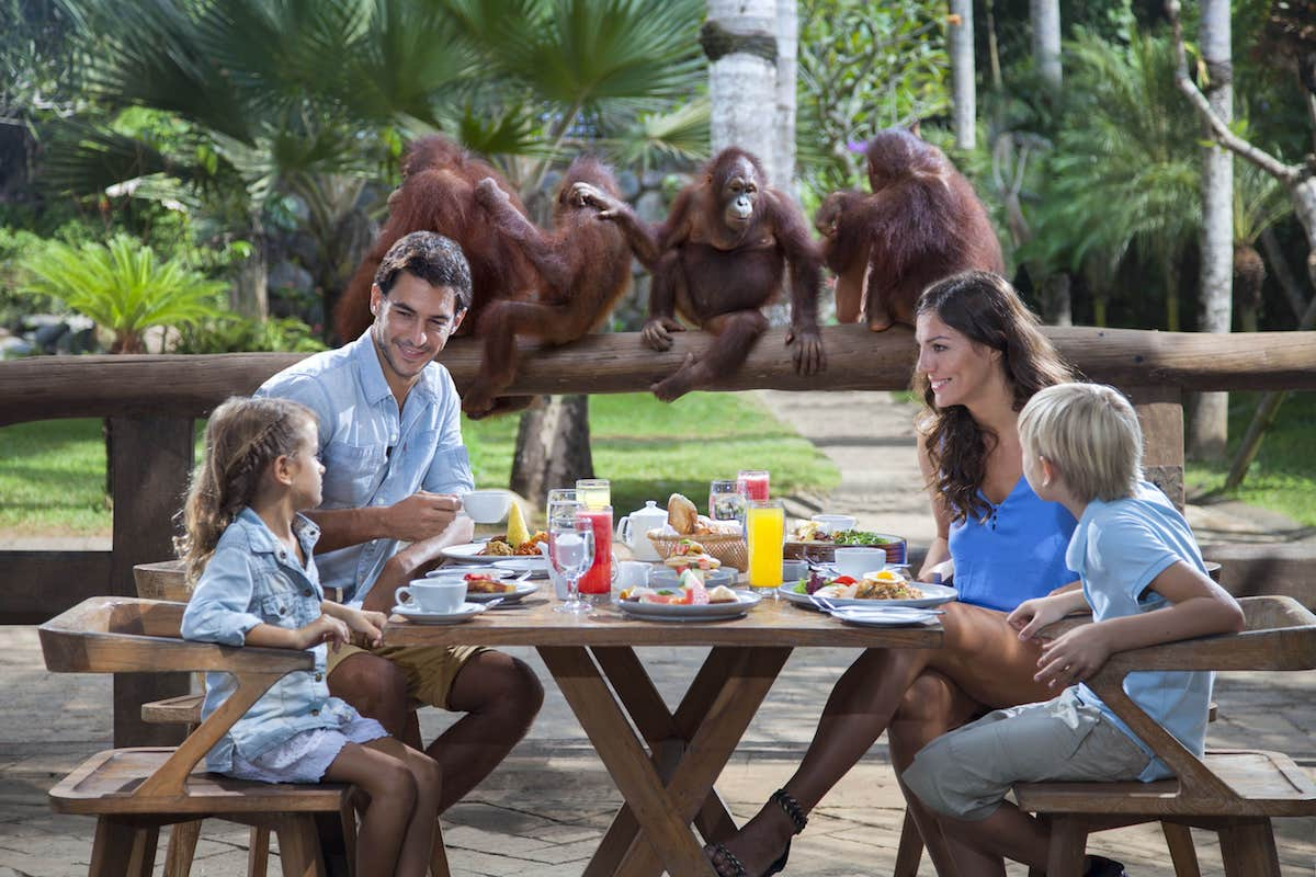 Breakfast with the Orang Utans at Bali Zoo